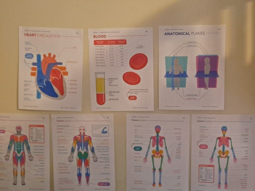 Colorful printouts to go along with the Exercise and Sports Physiology homeschool science class.